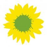 Sonnenblume auf wei0